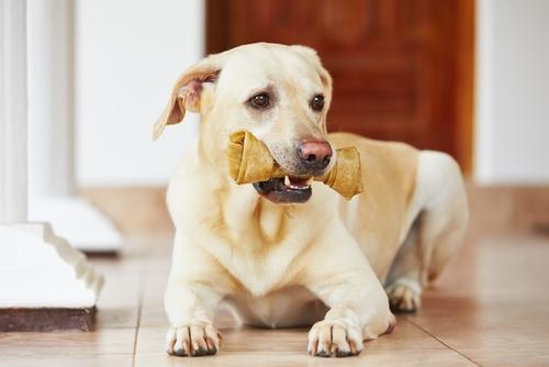 fisiologia-canina3