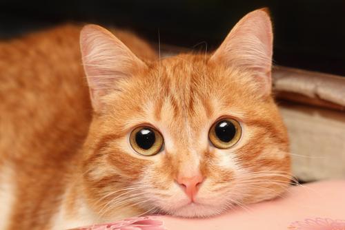 Come sapere se il mio gatto è ammalato?