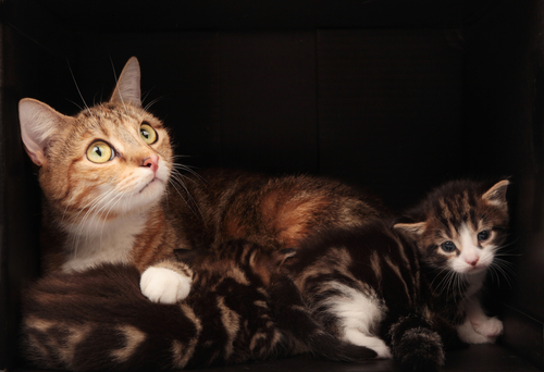 gatta-con-gattini