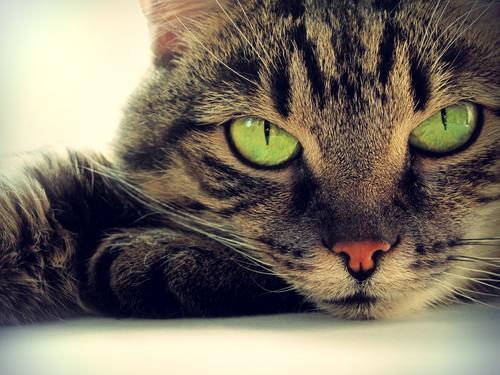 Sapete Perché I Gatti Litigano I Miei Animali