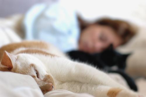gatti che-dormono nel letto