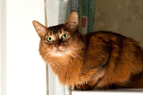 gatti-e-il-sesso-3
