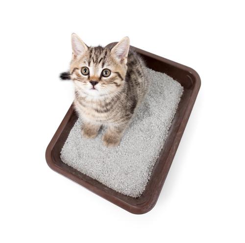 gatti-gravidanza-2
