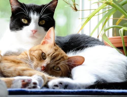 gatti innamorati 2