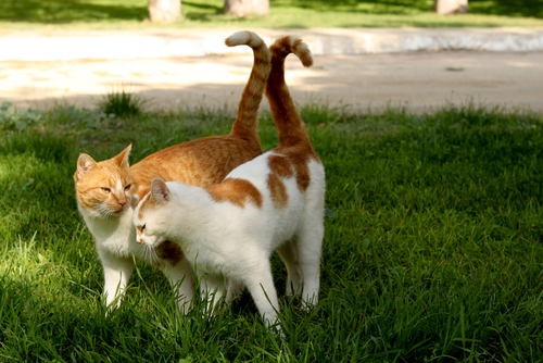 gatti innamorati 3