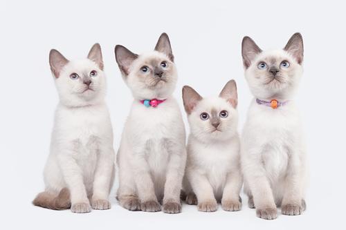 Lettiera per gatti: imparate a scegliere la migliore