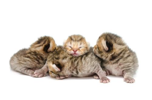 Cura e alimentazione dei gattini prematuri
