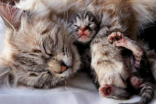 Quando separare un gattino dalla madre