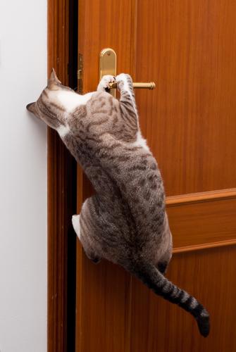 gatto-apre-porta