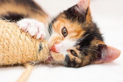 gatto che morde 2