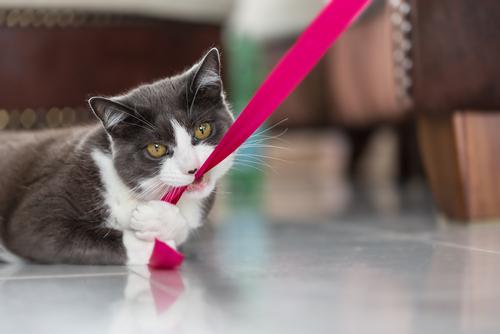 gatto che morde 3