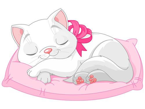 gatto-con-cuscino