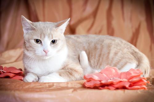 gatto-con-fiori