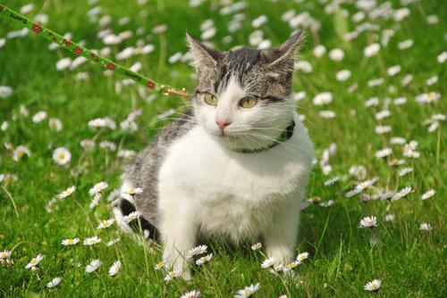 Segnali che il vostro gatto è in realtà un cane