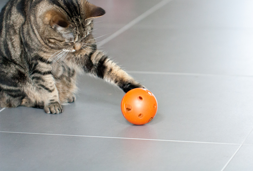 gatto-con-palla