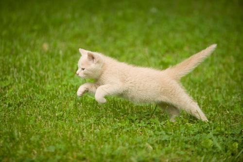 gatto-corre