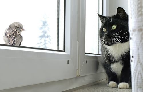 gatto-e-uccello
