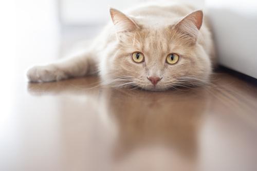 Malattie dei gatti: alcuni sintomi