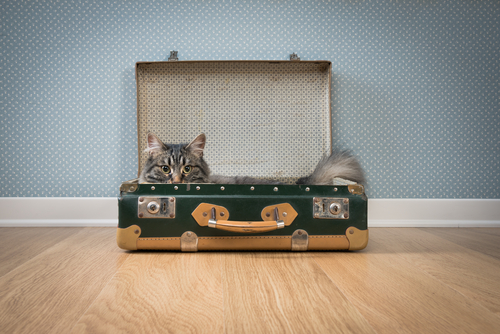 gatto-in-una-valigia