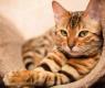 gatto-linguaggio-corpo