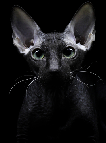 gatto-mistico