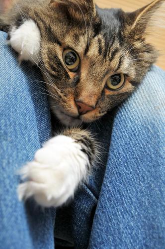 gatto-stressato-2