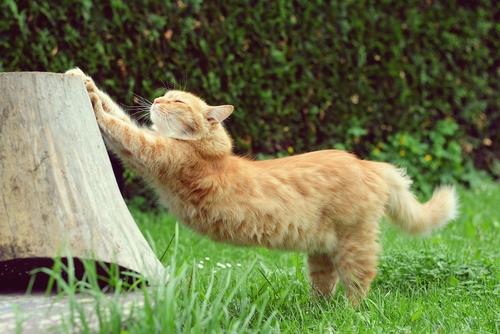 Ecco come marcano il territorio i gatti