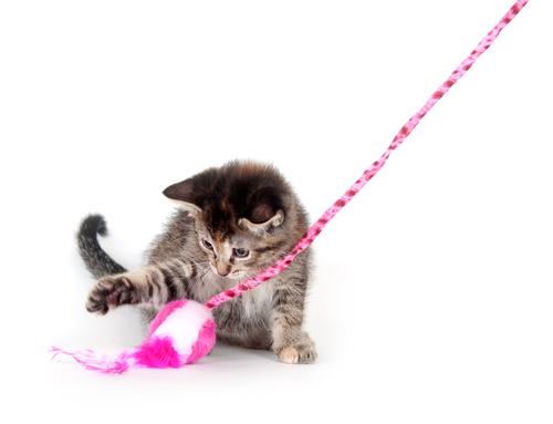 Come giocare con il vostro gatto