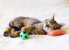 giochini-gatti
