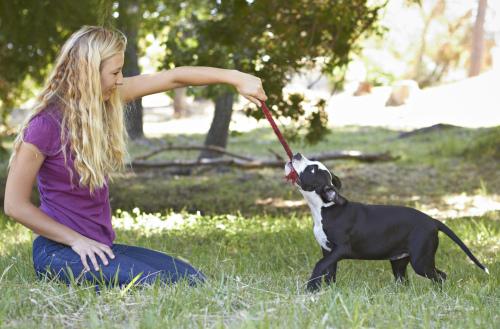 ragazza gioca a tira e molla con un cucciolo