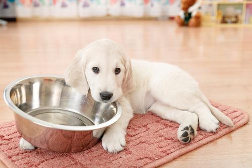 5 motivi per cui utilizzare una ciotola in metallo per alimentare il vostro animale domestico