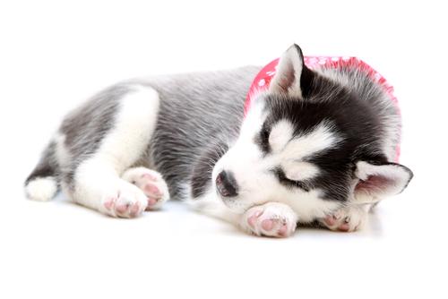 Consigli per far dormire il vostro cane