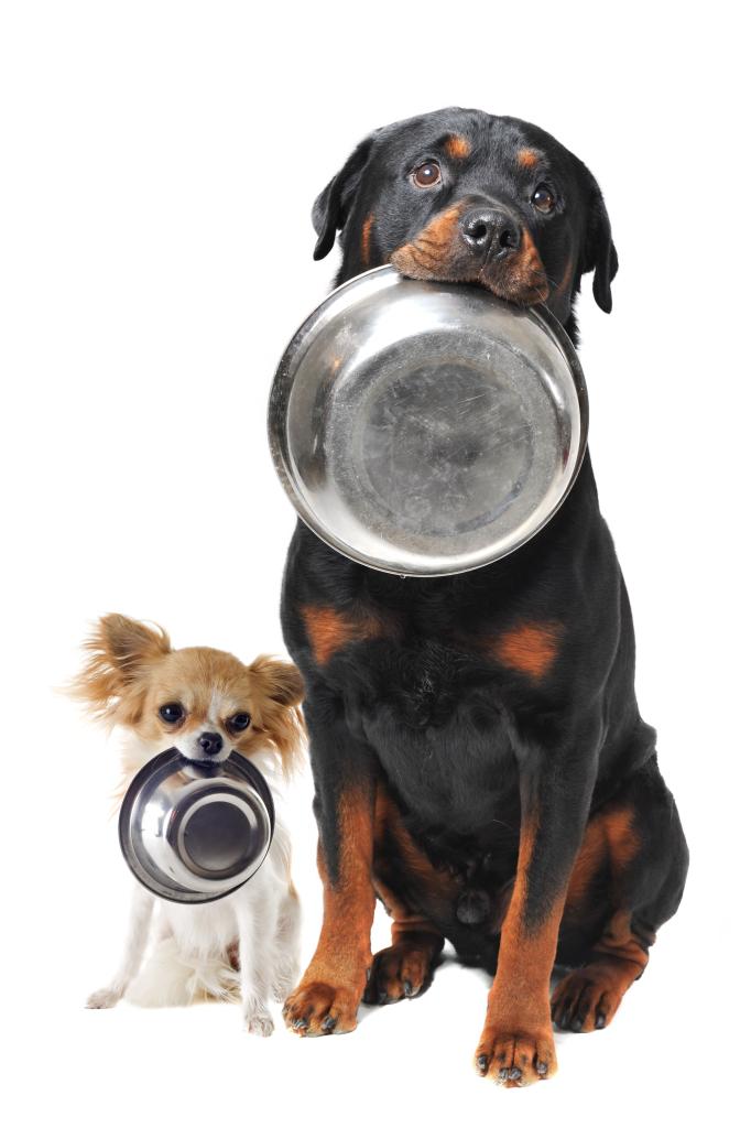 il cucciolo -non- vuole mangiare-682x1024