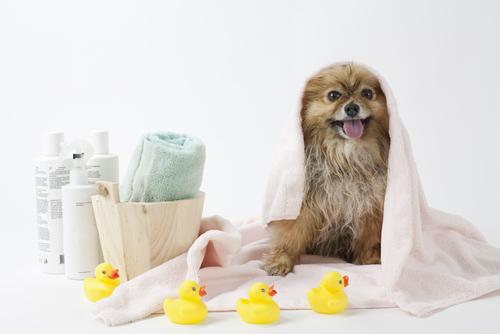 lavare-il tuo-cane-2