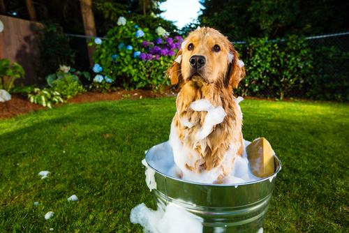 I migliori consigli per lavare il vostro cane