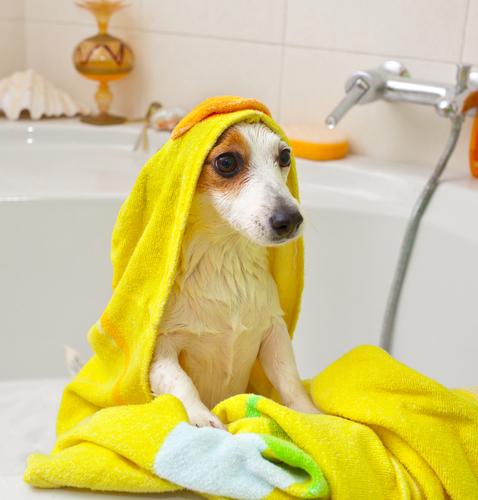 lavare-un-cane-3