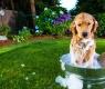 lavare-un-cane