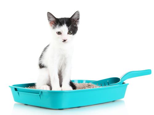 lettiera-gatto