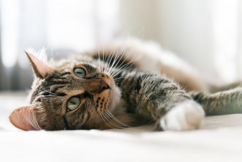 Il linguaggio dei gatti ...cosa vogliono dirci?