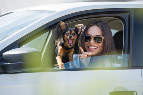 Il mal d'auto negli animali domestici
