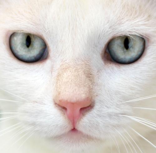 Miti e verità sui gatti