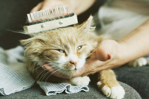 occhi-gatto3