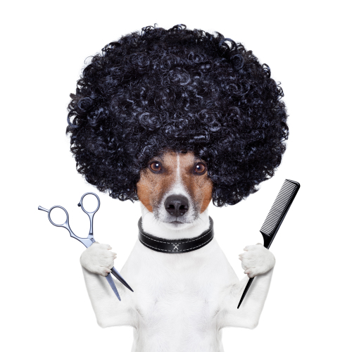 Hairstyle per cani? Tutto quello che devi sapere