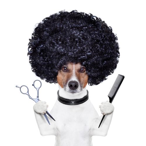 parrucchiere-per-cani-e1418730199103
