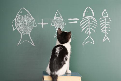 Psicologia e intelligenza dei gatti