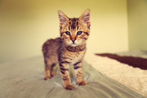 Le unghie dei gatti: come comportarsi?