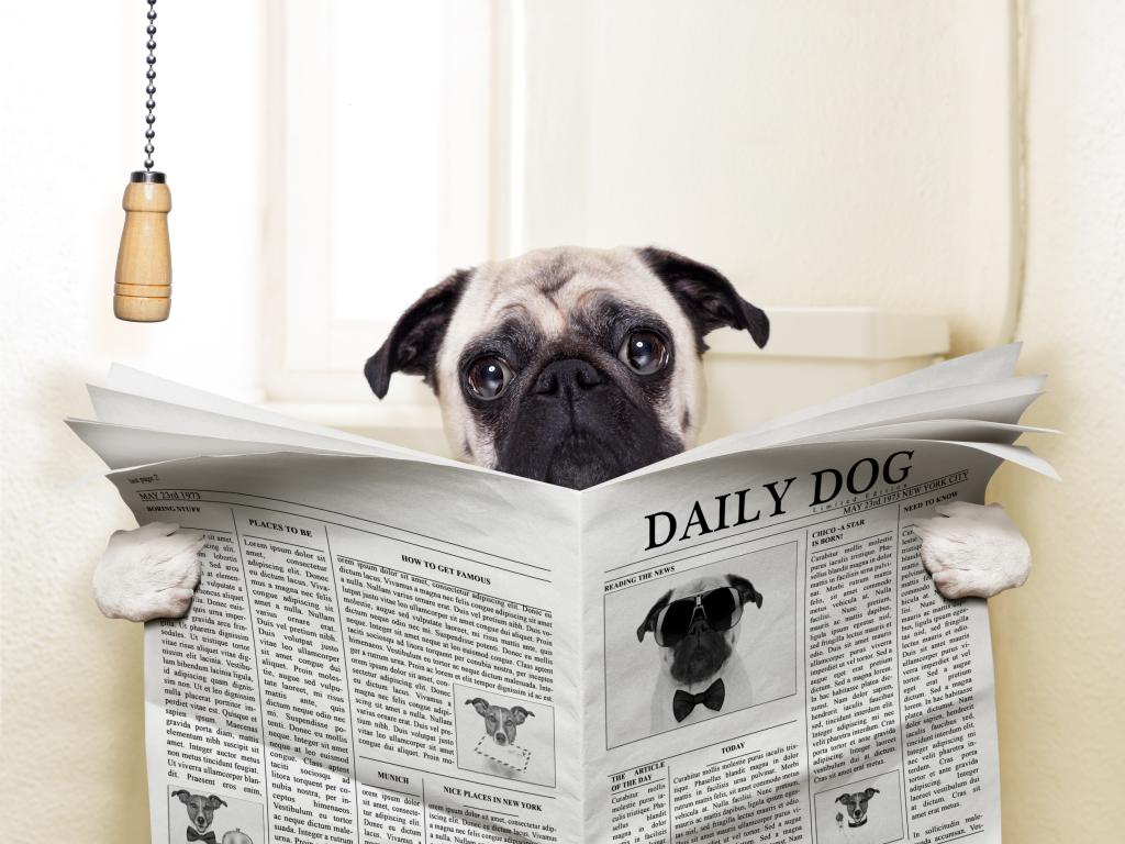 Eliminare l'odore di urina di cane con metodi naturali