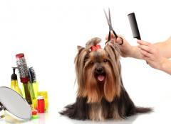 spazzolare-il-cane