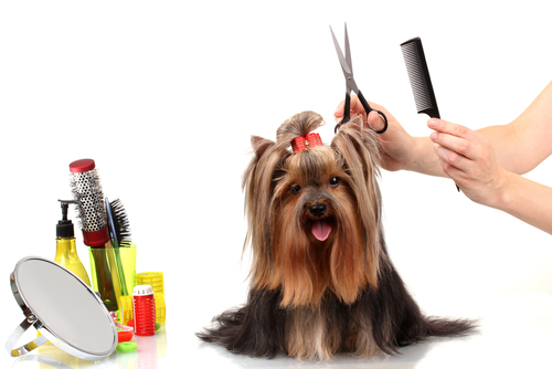 Trucchi e consigli per spazzolare il cane