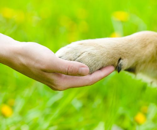 Come tagliare gli speroni del vostro cane